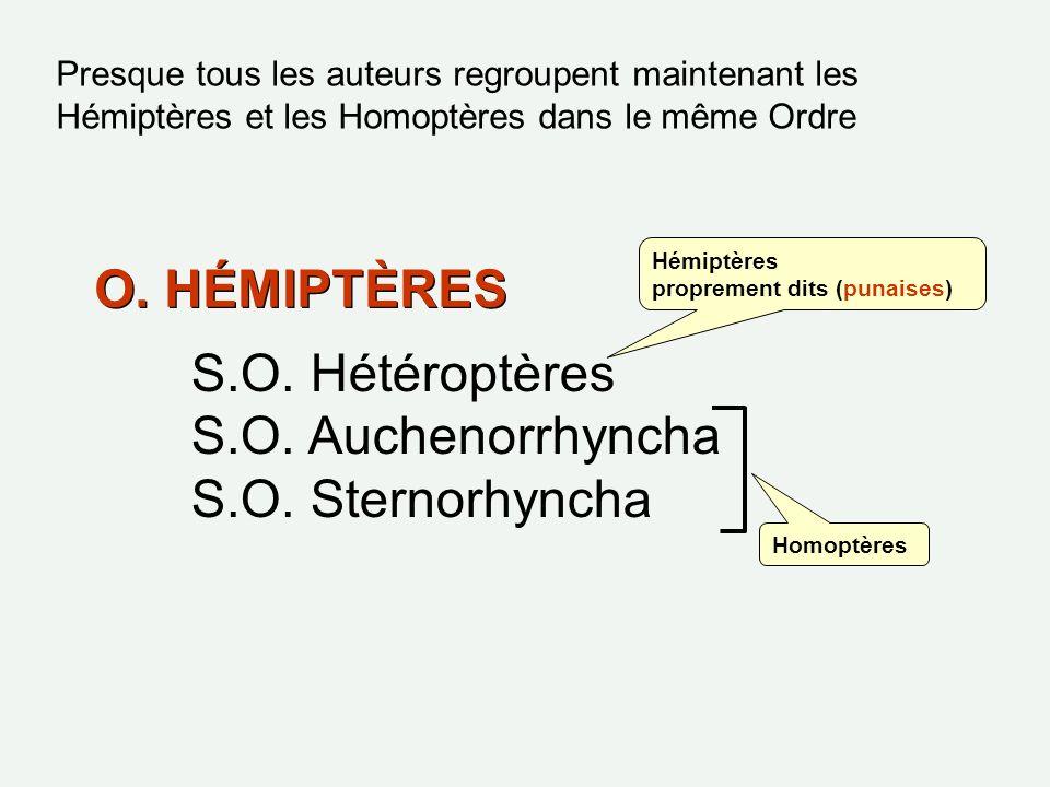 O. HÉMIPTÈRES S.O. Hétéroptères S.O. Auchenorrhyncha