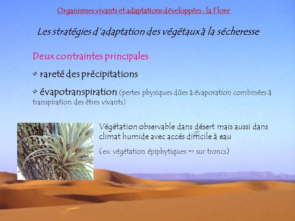 Les stratégies d'adaptation des végétaux à la sécheresse