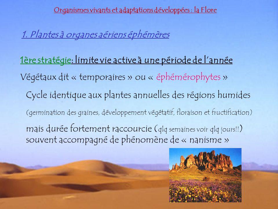 1. Plantes à organes aériens éphémères