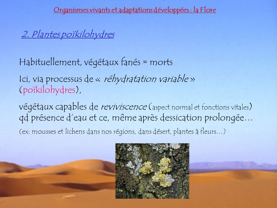 2. Plantes poïkilohydres