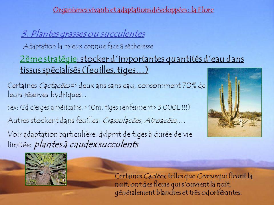 3. Plantes grasses ou succulentes