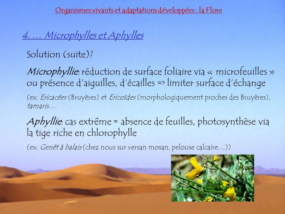4. … Microphylles et Aphylles