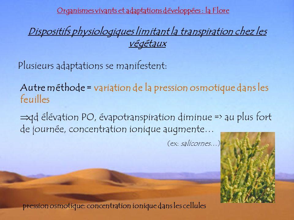 Dispositifs physiologiques limitant la transpiration chez les végétaux