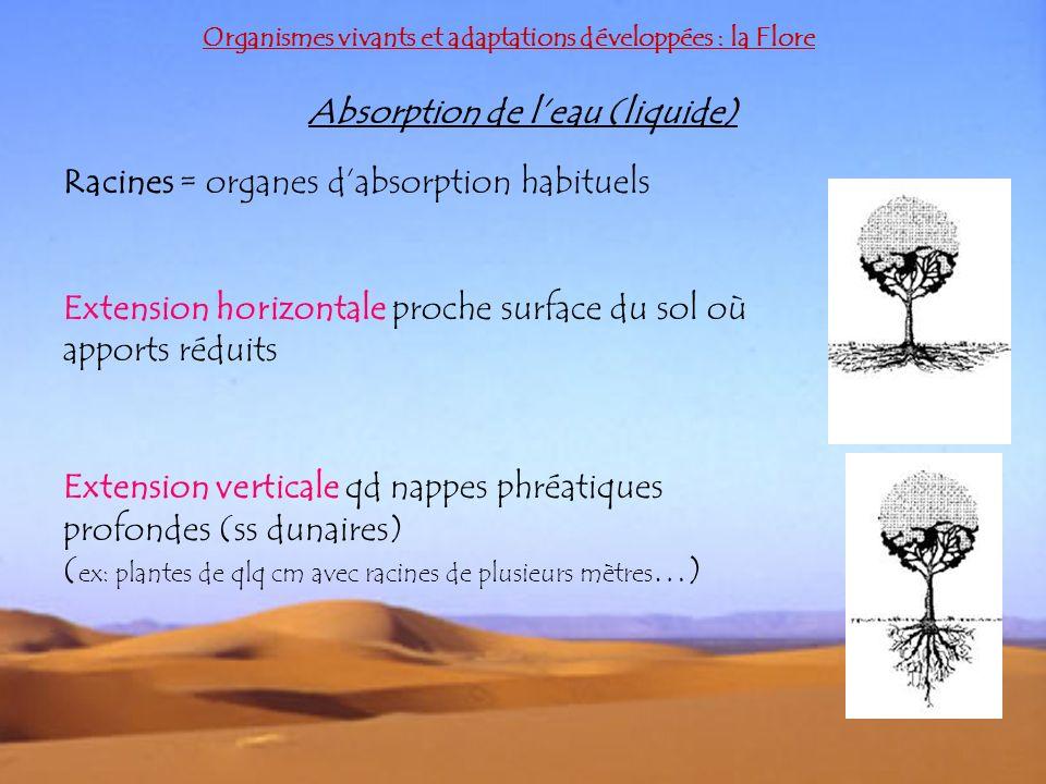 Absorption de l'eau (liquide)