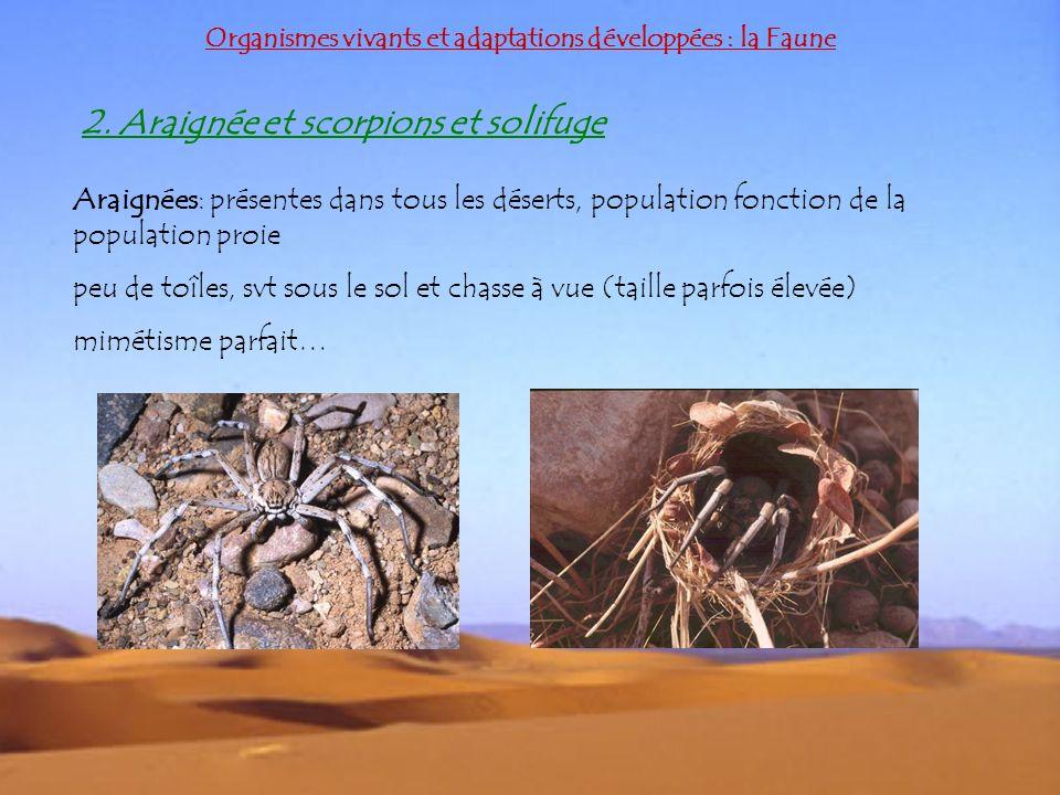 2. Araignée et scorpions et solifuge