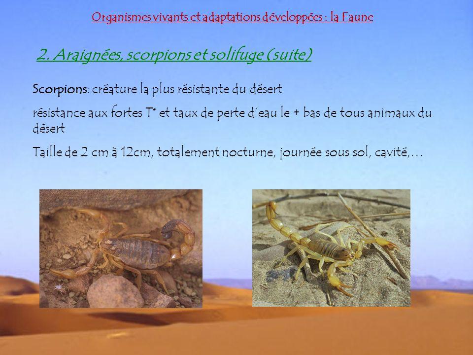 2. Araignées, scorpions et solifuge (suite)