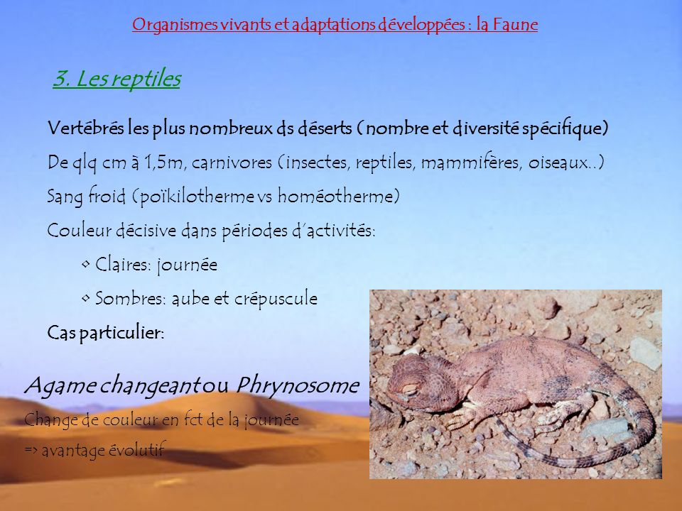 Agame changeant ou Phrynosome