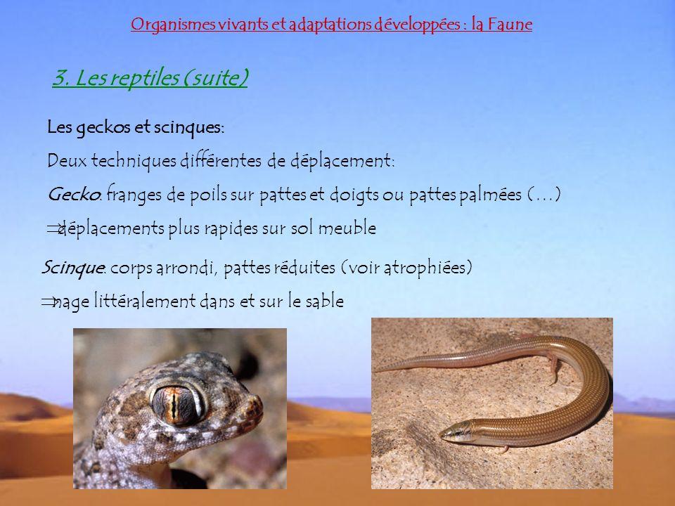 3. Les reptiles (suite) Les geckos et scinques: