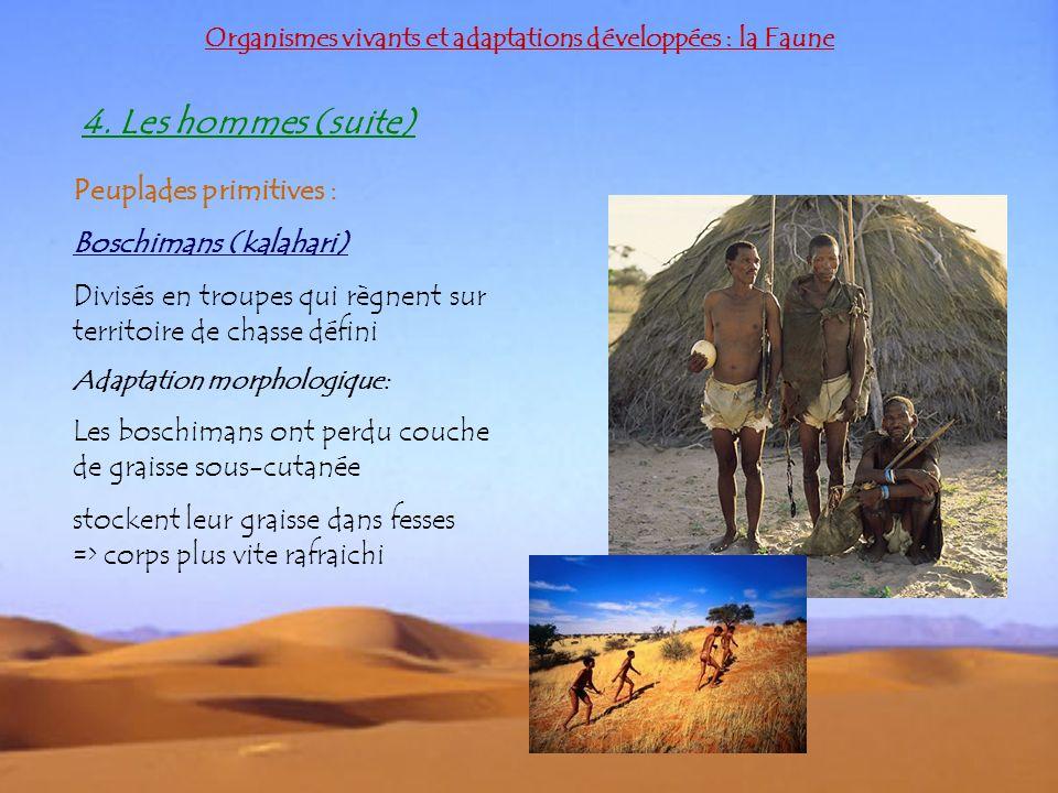 4. Les hommes (suite) Peuplades primitives : Boschimans (kalahari)
