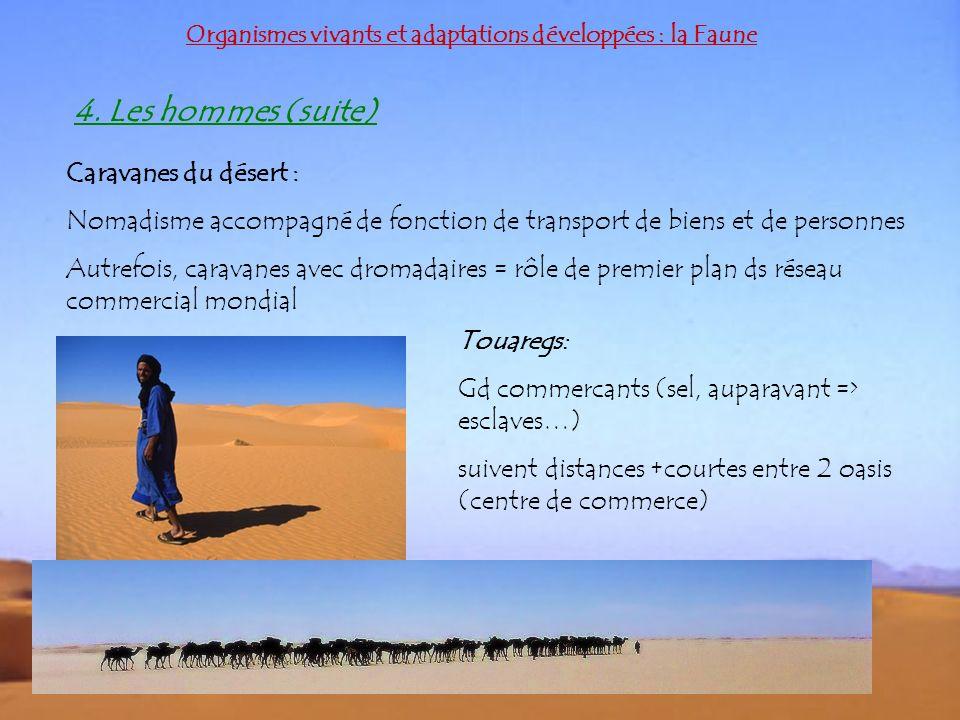 4. Les hommes (suite) Caravanes du désert :