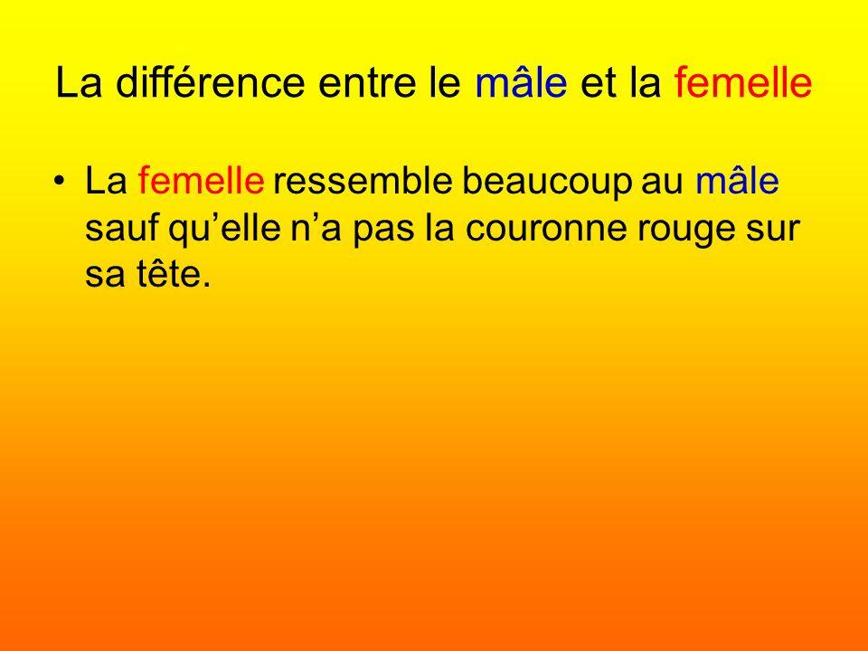 La différence entre le mâle et la femelle