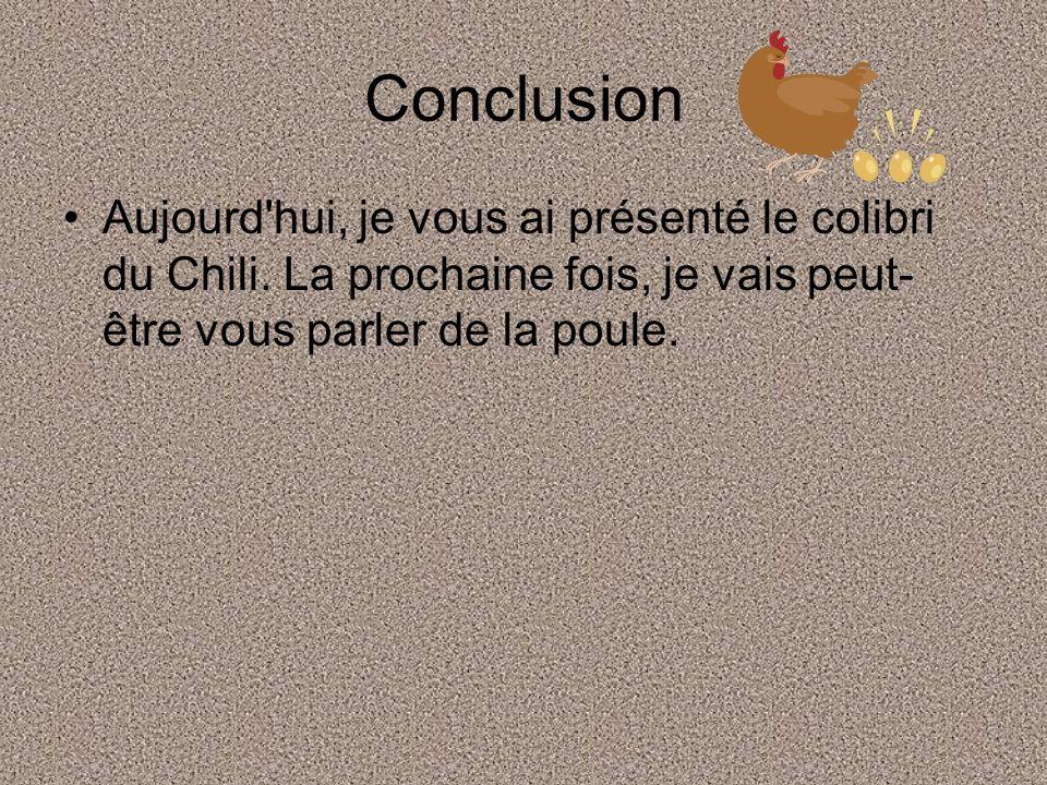 Conclusion Aujourd hui, je vous ai présenté le colibri du Chili.