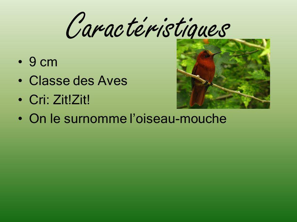 Caractéristiques 9 cm Classe des Aves Cri: Zit!Zit!