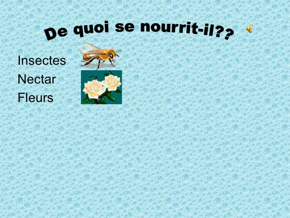 De quoi se nourrit-il Insectes Nectar Fleurs