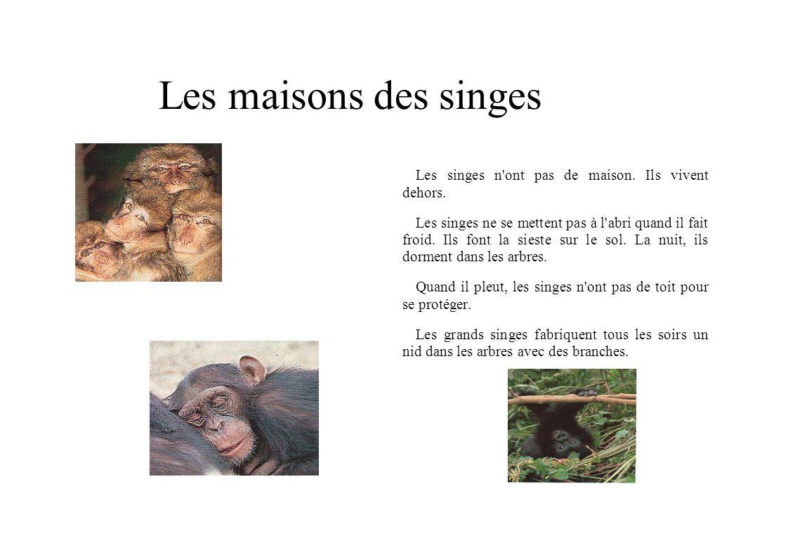 Les maisons des singes Les singes n ont pas de maison. Ils vivent dehors.