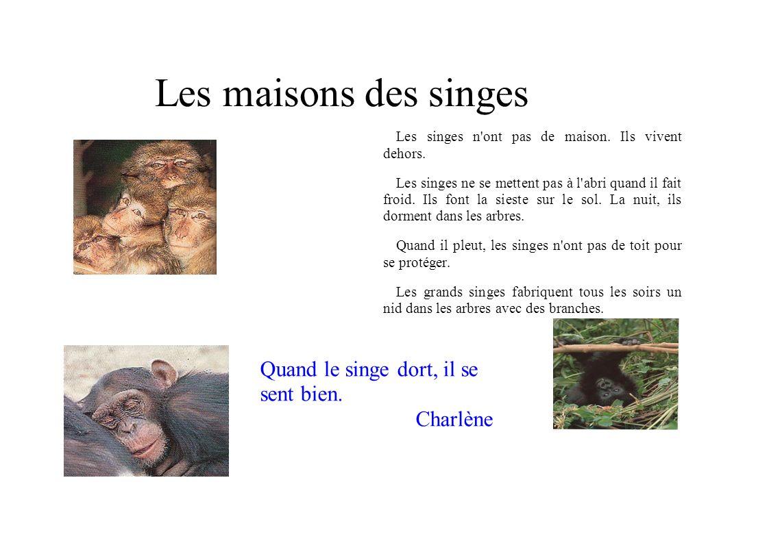 Les maisons des singes Quand le singe dort, il se sent bien. Charlène