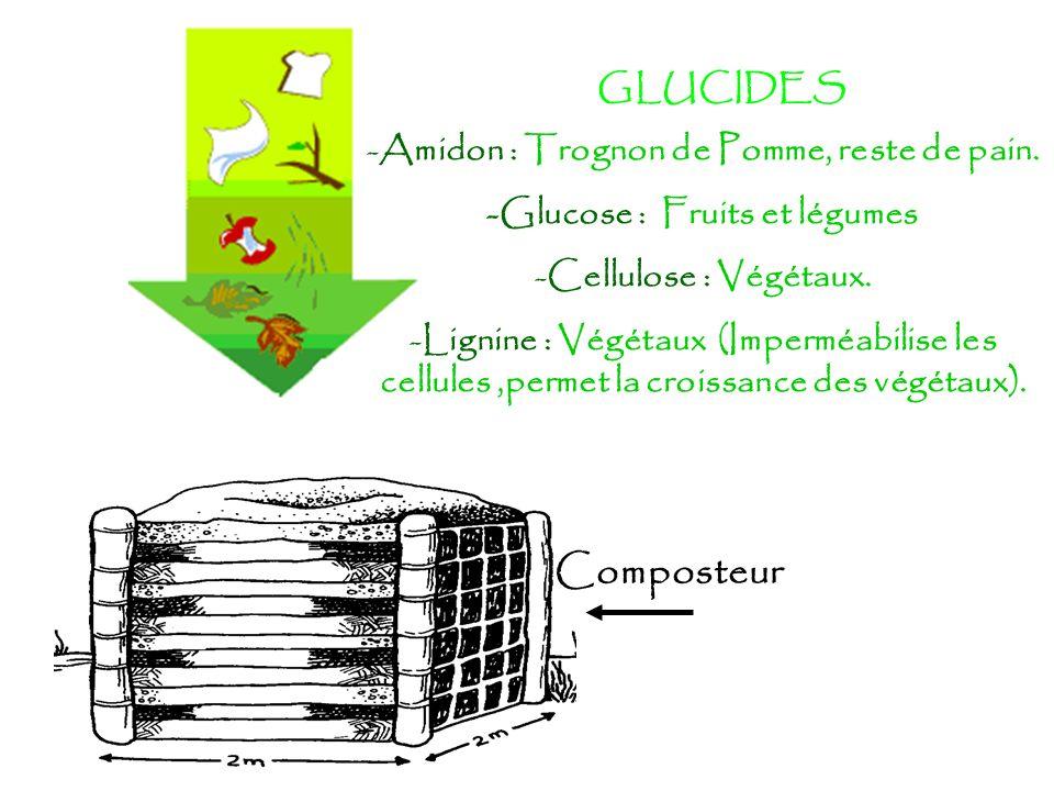 Amidon : Trognon de Pomme, reste de pain. -Glucose : Fruits et légumes