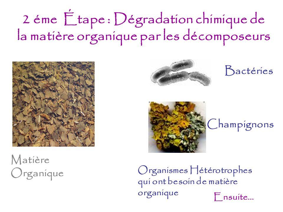 2 éme Étape : Dégradation chimique de la matière organique par les décomposeurs
