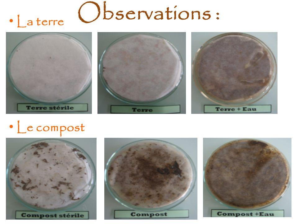 Observations : La terre Le compost