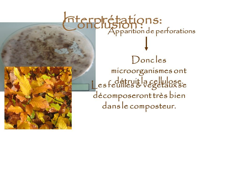 Interprétations: Conclusion :