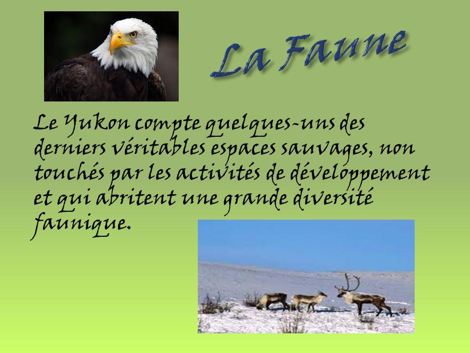 La Faune