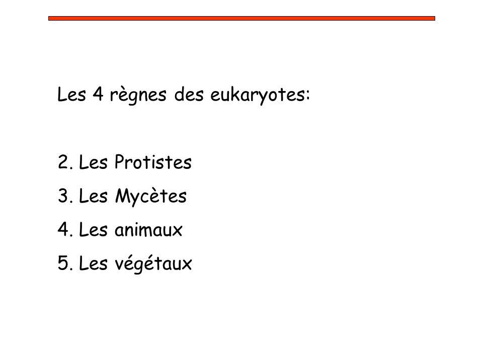 Les 4 règnes des eukaryotes: