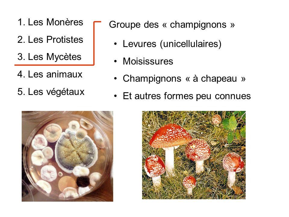 1. Les Monères 2. Les Protistes. 3. Les Mycètes. 4. Les animaux. 5. Les végétaux. Groupe des « champignons »