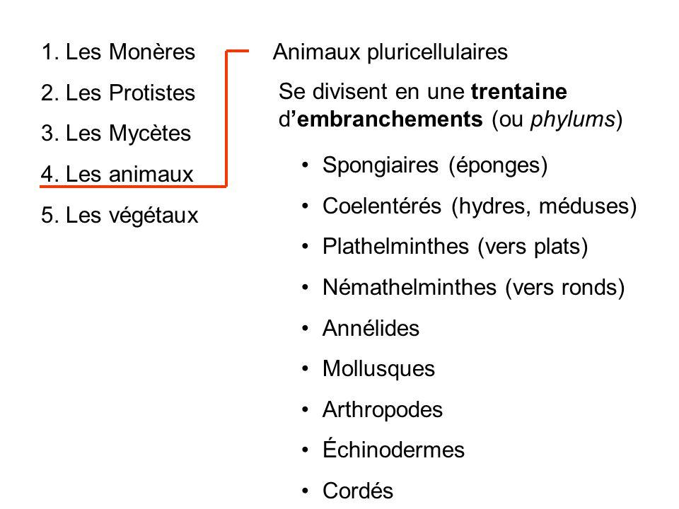 1. Les Monères 2. Les Protistes. 3. Les Mycètes. 4. Les animaux. 5. Les végétaux. Animaux pluricellulaires.
