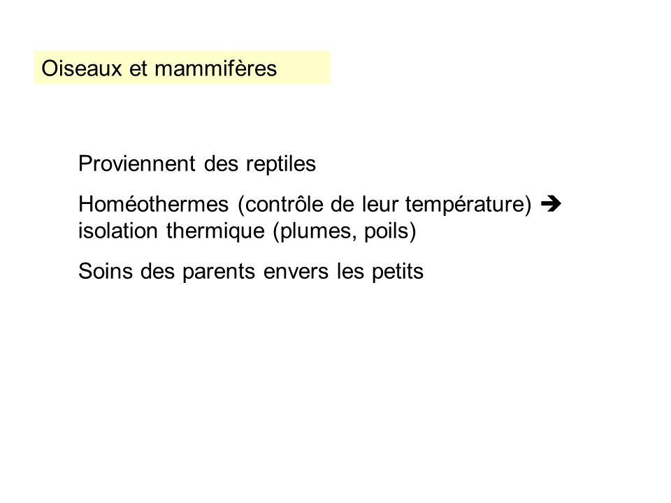 Oiseaux et mammifères Proviennent des reptiles. Homéothermes (contrôle de leur température)  isolation thermique (plumes, poils)