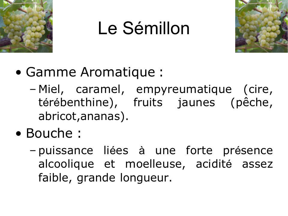 Le Sémillon Gamme Aromatique : Bouche :