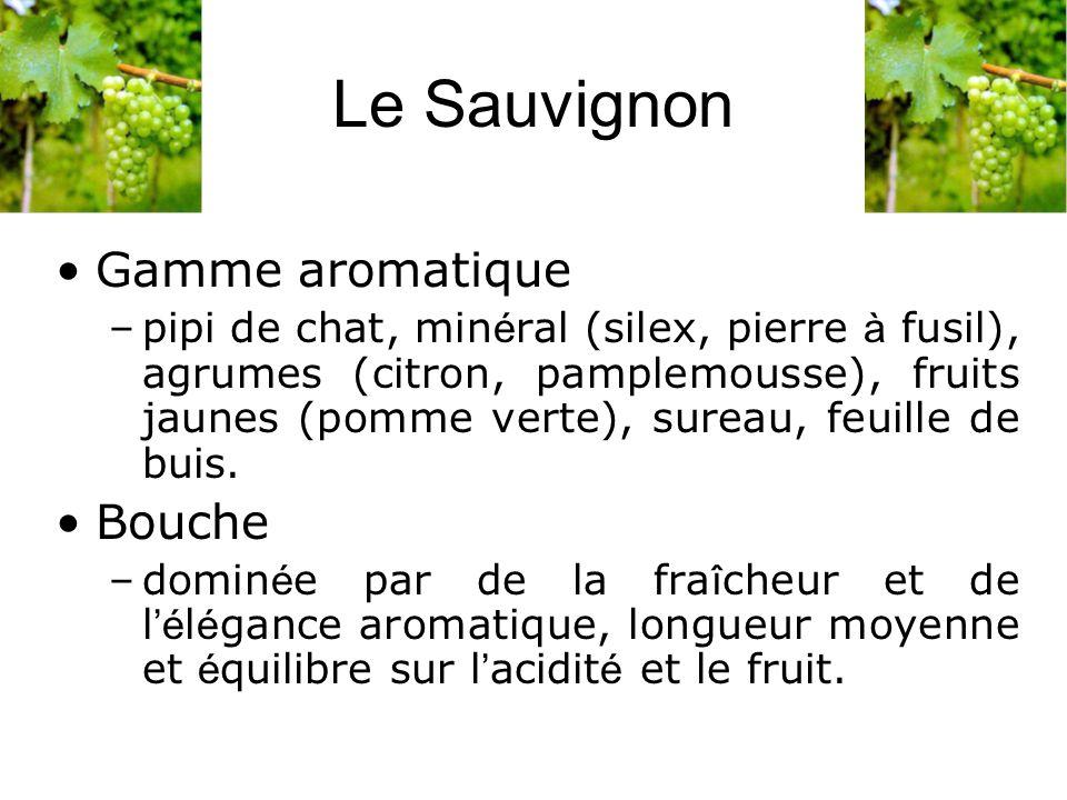Le Sauvignon Gamme aromatique Bouche