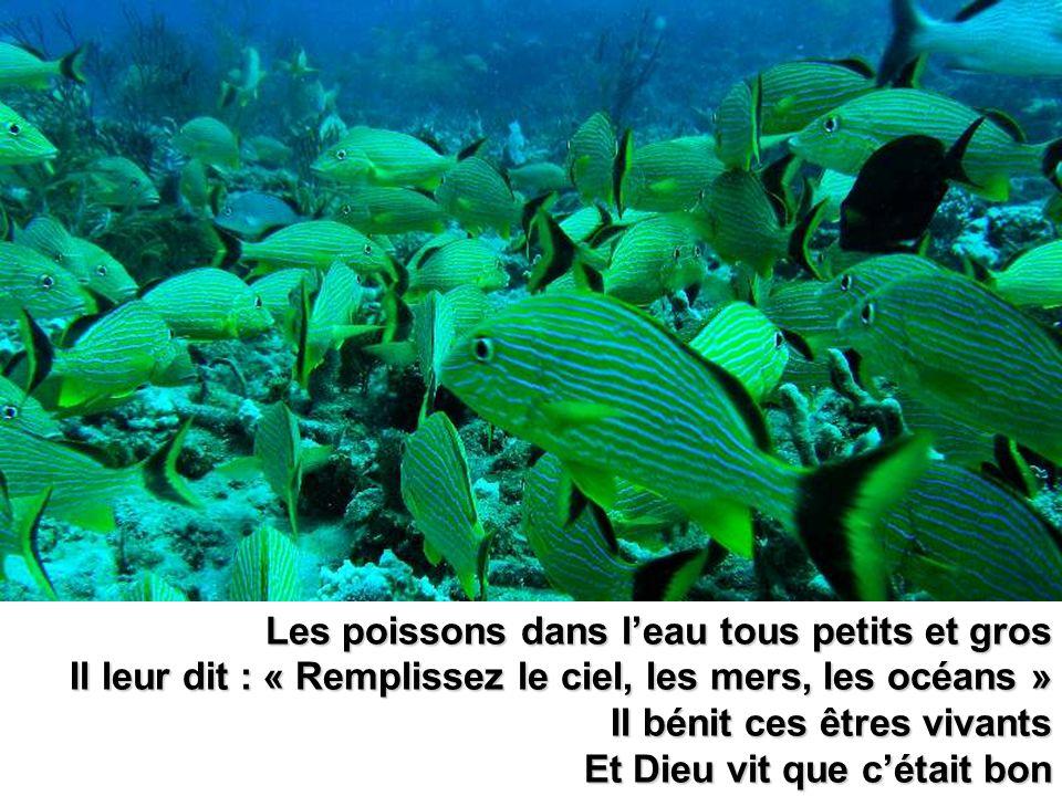 Les poissons dans l'eau tous petits et gros
