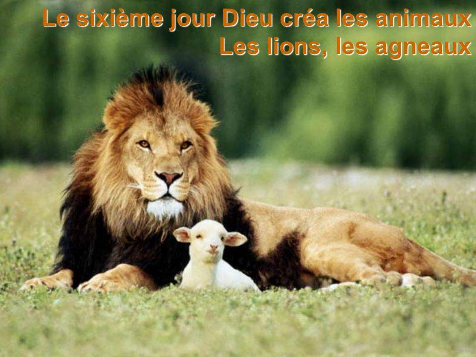 Le sixième jour Dieu créa les animaux