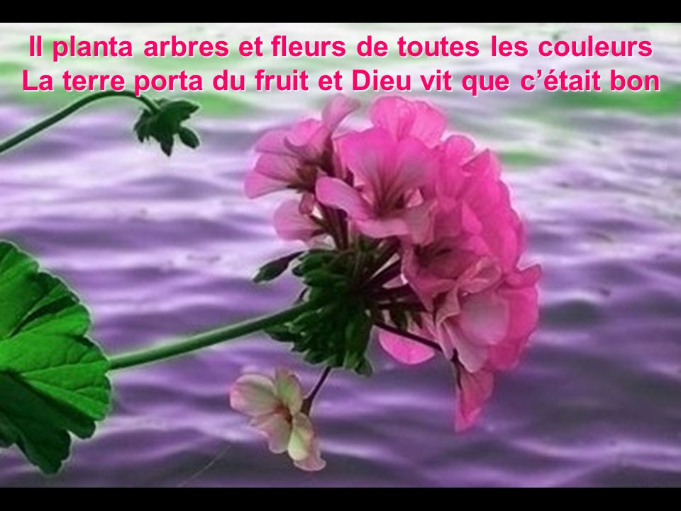 Il planta arbres et fleurs de toutes les couleurs