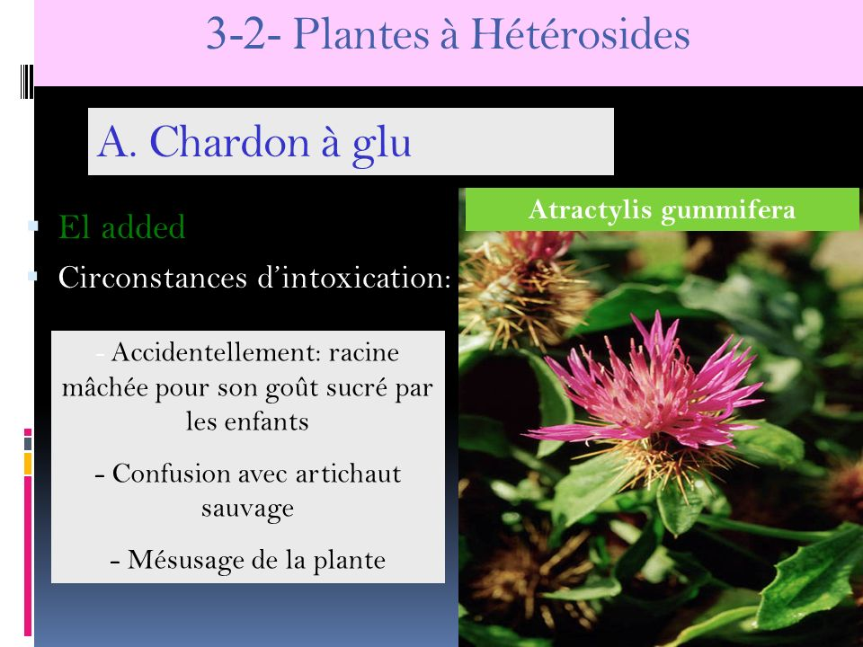3-2- Plantes à Hétérosides