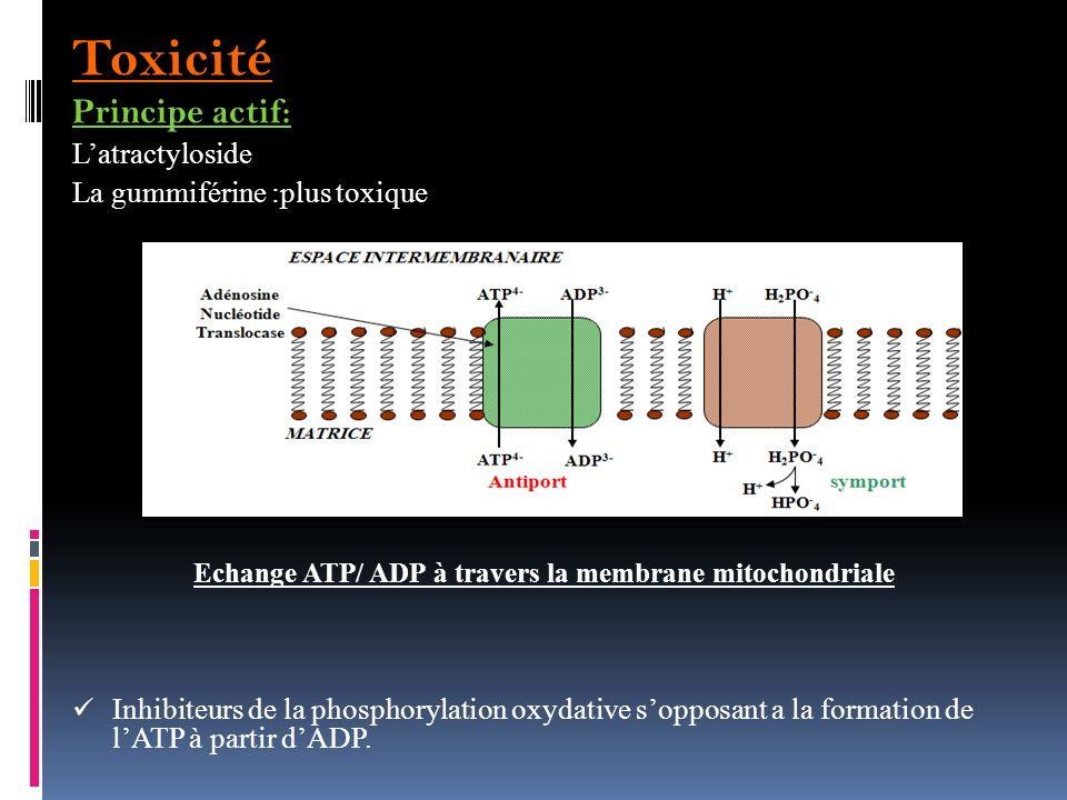 Echange ATP/ ADP à travers la membrane mitochondriale