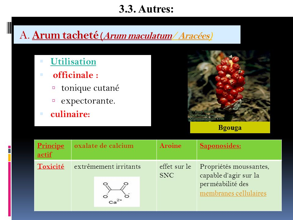 A. Arum tacheté (Arum maculatum/ Aracées)