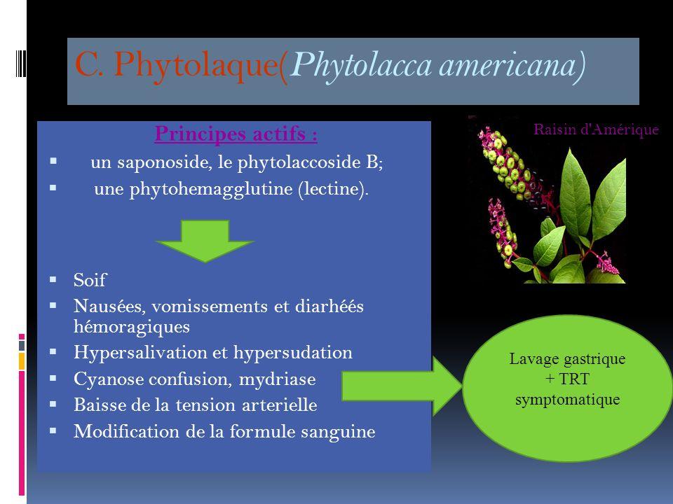 C. Phytolaque(Phytolacca americana)
