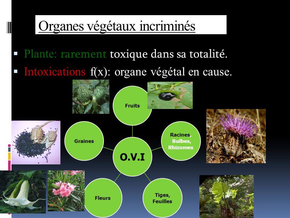 Organes végétaux incriminés