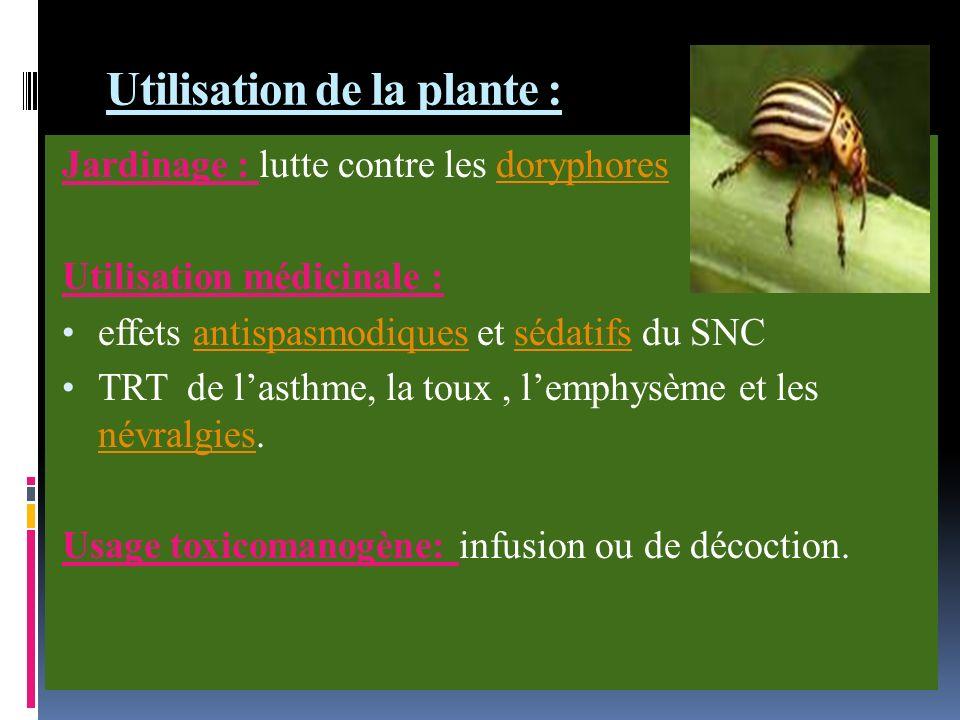 Utilisation de la plante :