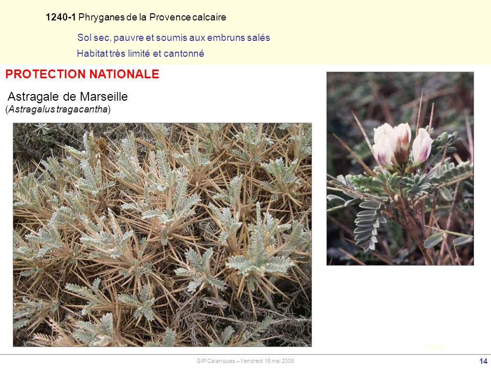 PROTECTION NATIONALE 1240-1 Phryganes de la Provence calcaire