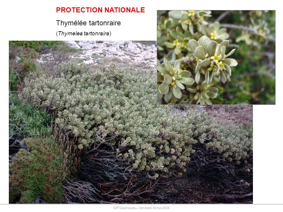PROTECTION NATIONALE Thymélée tartonraire (Thymelea tartonraira)