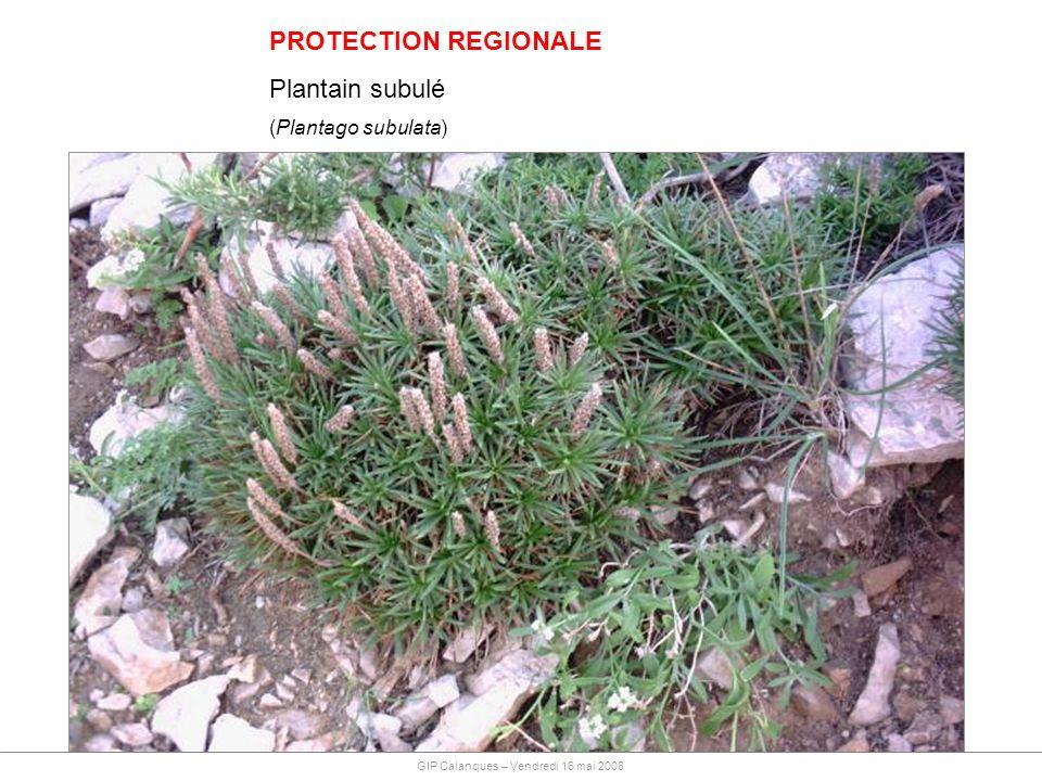 PROTECTION REGIONALE Plantain subulé (Plantago subulata)