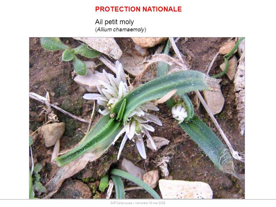 PROTECTION NATIONALE Ail petit moly (Allium chamaemoly)