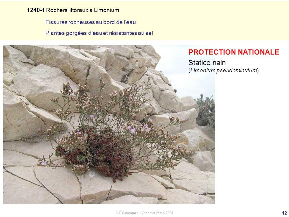 PROTECTION NATIONALE Statice nain 1240-1 Rochers littoraux à Limonium
