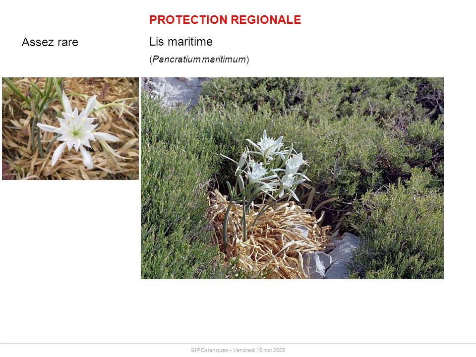 PROTECTION REGIONALE Lis maritime Assez rare (Pancratium maritimum)