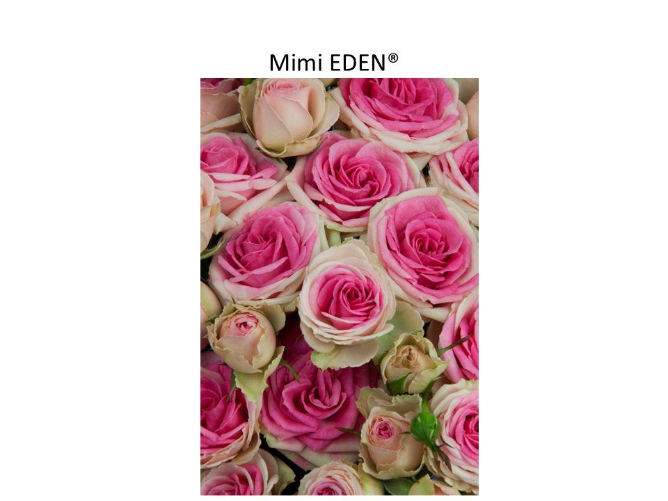 Mimi EDEN®