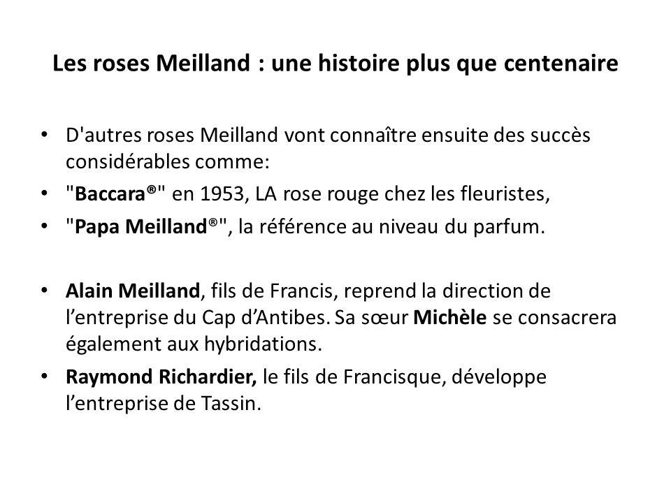 Les roses Meilland : une histoire plus que centenaire
