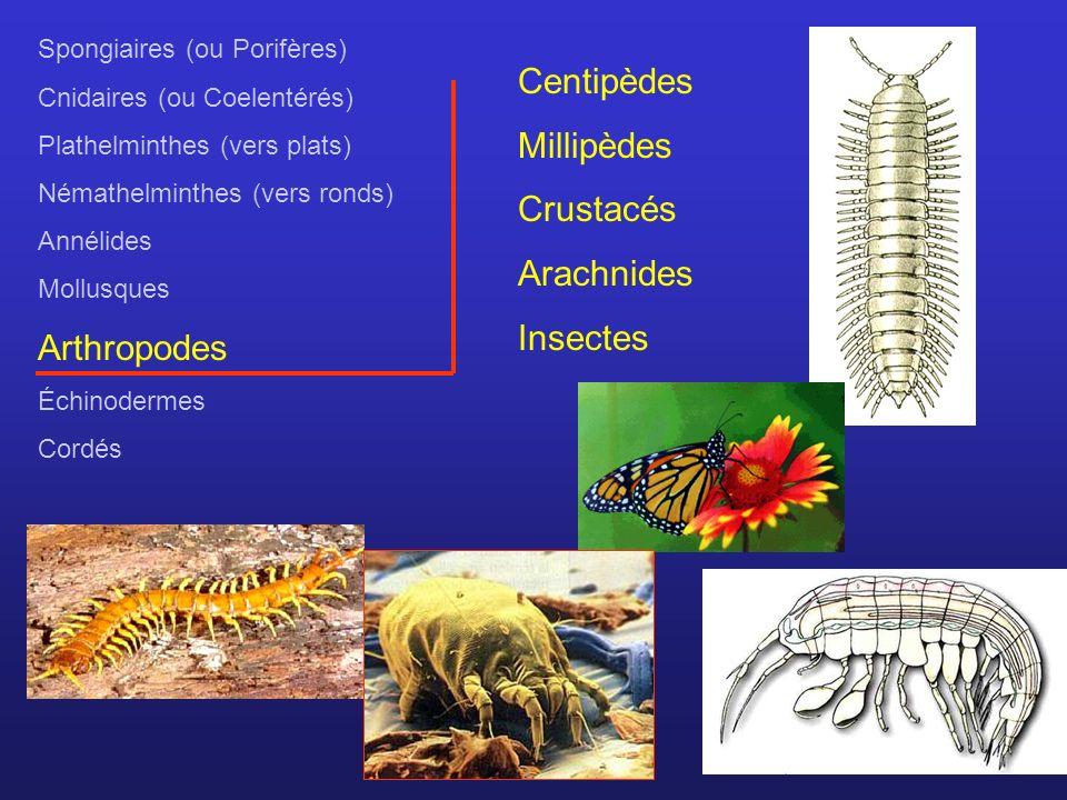 Centipèdes Millipèdes Crustacés Arachnides Arthropodes Insectes