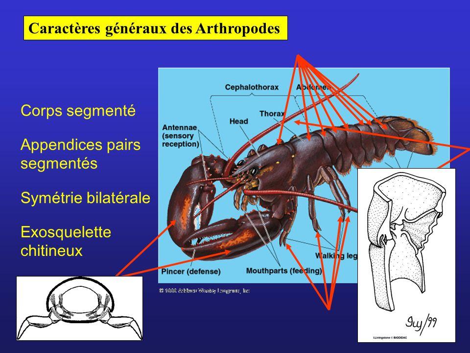 Caractères généraux des Arthropodes
